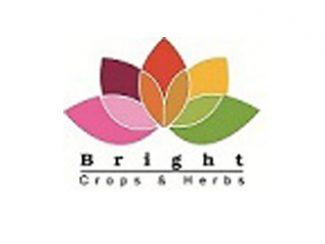 Bright Crops Tanta Egypt